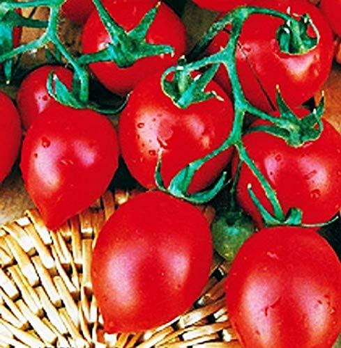 Semillas de Tomate Matraz, variedad pequeña